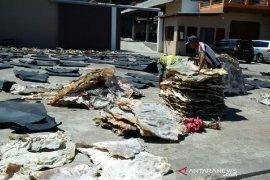 Pelaku penyamakan di Garut bangkrut berdampak harga kulit hewan kurban turun drastis