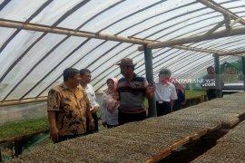 Produksi cabai di Kulon Progo  150 ton/hari