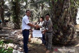 Minamas Plantation donasikan 33 Ekor Hewan Kurban