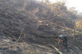 Kebakaran puncak Gunung Ciremai hanguskan habitat edelweis 343 ha