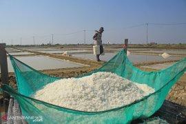 Potensi tambak garam Karawang hanya 177 hektare yang digarap