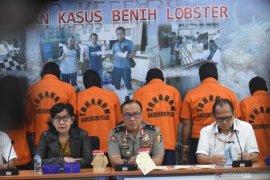 Hukuman ringan tidak bikin jera pelaku jual beli bibit lobster ilegal
