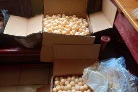 Polisi amankan 1.340 butir telur penyu di Pelabuhan Sintete
