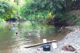 "Penyelamatan ""herbal ajaib"" dari hutan rimba Kalimantan"