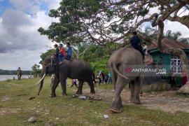 KEE koridor gajah sumatera di Seblat pun diluncurkan