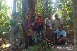 Dishut Babel identifikasi tanaman gaharu hutan Pelangas