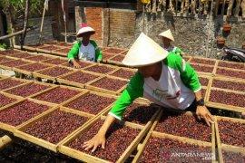 Petani Temanggung tingkatkan kualitas hasil kopi