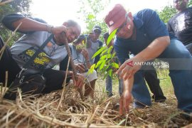 Antara kalsel agustusan tanam pohon di Tahura