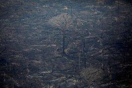 Pesawat tempur bantu pemadaman kebakaran Amazon