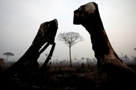 Komitmen global atasi kebakaran Amazon diserukan Paus Fransiskus
