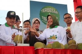 Pemkot Pontianak mendukung festival durian digelar secara rutin