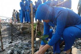 Peringati HUT ke-73, Jalasenastri tanam mangrove di Pesisir Karangantu