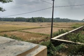 Petani Lebak menganggur akibat kemarau panjang