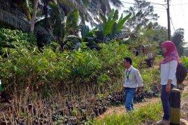 Dari bambu  warga Halong  raup keuntungan jutaan rupiah