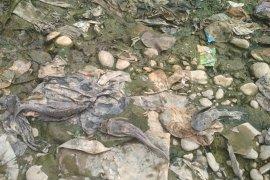 Ombudsman sebut DLH Bogor tidak kompeten atas pengawasan Sungai Cileungsi