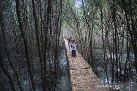 Pengembangan Ekowisata Mangrove