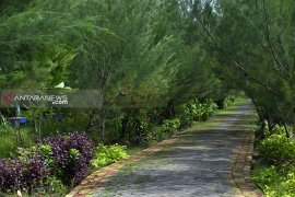 Surabaya terapkan program penanaman pohon berjarak 1,5 hingga 2 meter