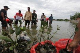 PLN  tanam 1.000 bakau di Banda Aceh