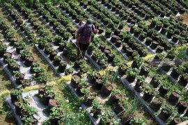 Pokdarwis Tulungagung kembangkan agrowisata  berbasis desa