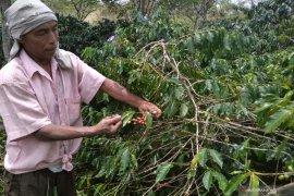 Petani terdampak PPN ekspor biji kopi Gayo