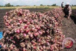 Harga bawang merah di Singkawang anjlok