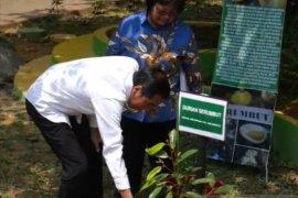 Presiden tanam  Durian Serumbut di Pontianak