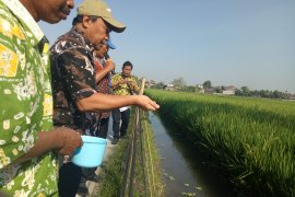 KKP tingkatkan produksi budidaya dengan salurkan benih-pakan ikan