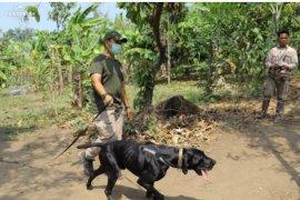 Anjing pelacak digunakan Polda Lampung tangkap penyelundup satwa