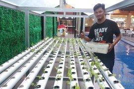 Loteng rumah Setiaji warga Natar, manfaatkan untuk kebun sayuran hidroponik