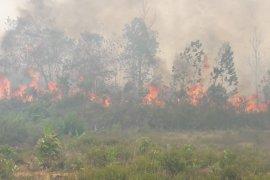 Api sulit dipadamkan, ratusan hektar lahan di Penjernang terbakar