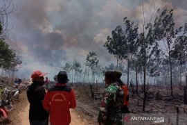 Puluhan hektare lahan milik inhutani terbakar