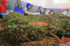 Petani lebak panen cengkih, penghasilan sampai Rp15 juta
