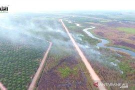 KLHK sebut kebakaran hutan berkaitan dengan perkebunan