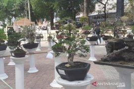 Pemeran bonsai turut meriahkan HUT Pangkalpinang ke-262