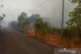 Lima hektare hutan di kawasan wisata alam Belitung terbakar