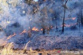 Kapolres dan Dandim Lumajang turut padamkan kebakaran hutan Gunung Semeru