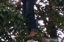 Tiga hari menghilang, seorang remaja ditemukan tergantung di pohon