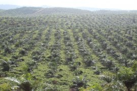 Pemkab Halteng kembangkan produk pangan lokal