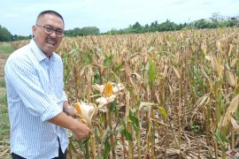 Swampland farming expected as a national food buffer: Balittra