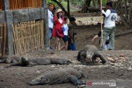 Komodo dan nasib  penghuni Pulau Komodo