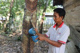 S Kalimantan rubber export to China affected by coronavirus: Gapkindo
