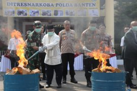Polda Banten musnahkan 82 Kilogram ganja