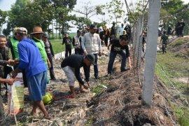 Hama tikus serang 131 hektare lahan padi di Madiun resahkan petani
