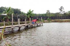 Desa Pinang Sebatang jadi sentra budi daya ikan air tawar