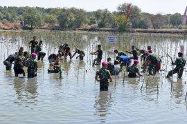 Peringati HUT TNI, pasukan Marinir tanam bakau