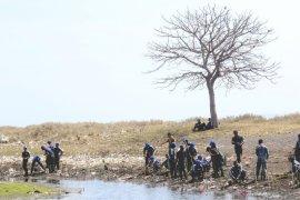 Tanam mangrove di pesisir