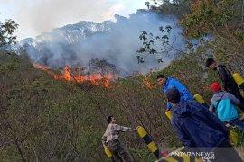 Areal hutan Gunung Papandayan di Garut terbakar