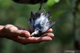 Burung dilindungi mati di Pamurbaya, Bambang DH ajak masyarakat jaga ekosistem