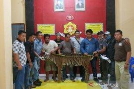 Polisi ungkap jaringan pemburu harimau di Bengkulu Utara