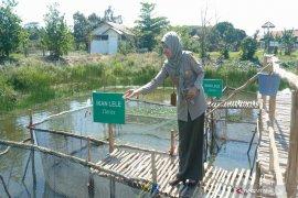 Balittra dorong petani rawa budi daya ikan